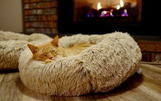 8 Tips On Choosing The Ideal Furniture For Your Pet Cat
