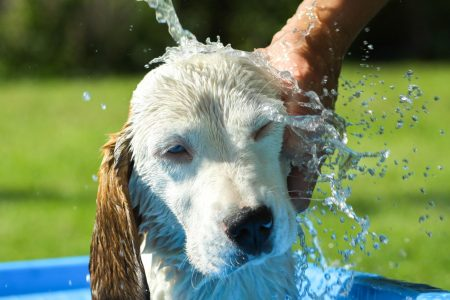 The Reason Why Dogs Go Wild After a Bath
