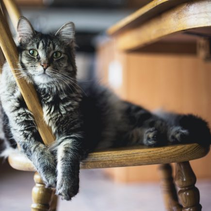 cat leaning on the chair